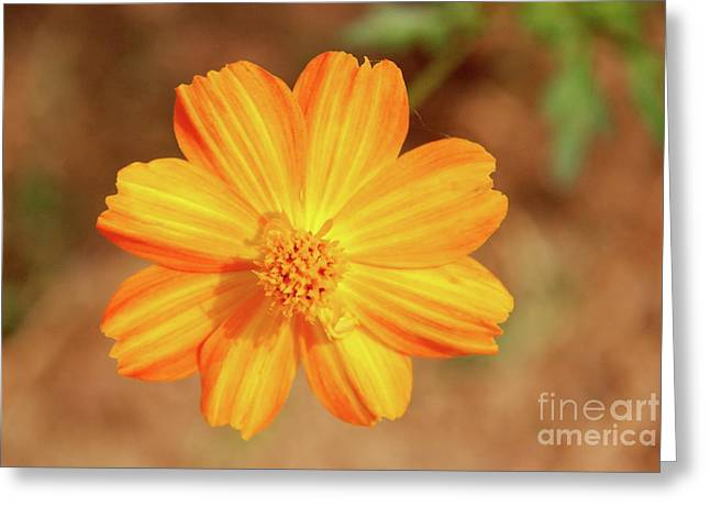 Orange Surbert Greeting Card
