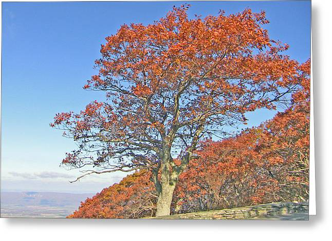 Greeting Card featuring the photograph Orange Tree And Blue Sky by Shirin Shahram Badie