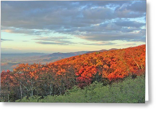 Orange Velvet In Shenandoah Greeting Card