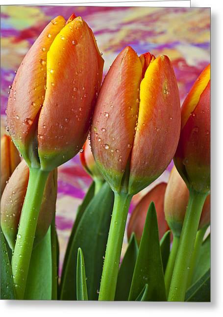Orange Yellow Tulips Greeting Card