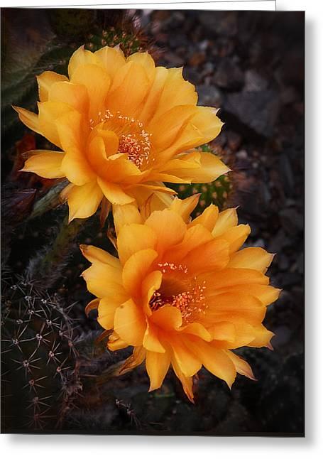 Orange You Beautiful  Greeting Card by Saija  Lehtonen