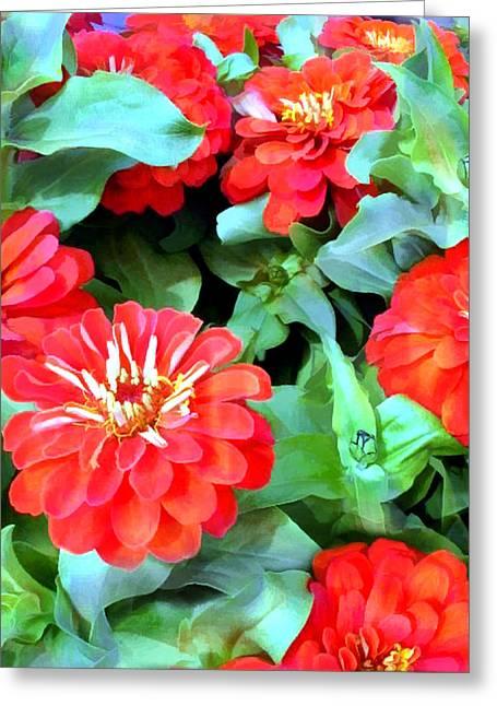 Orange Zinnias Greeting Card by Elaine Plesser