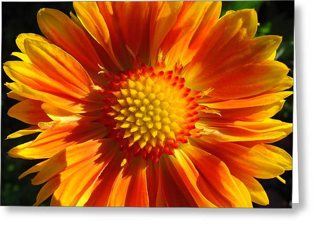 Greeting Card featuring the photograph Oranges And Lemons Gaillardia  by Ronda Broatch
