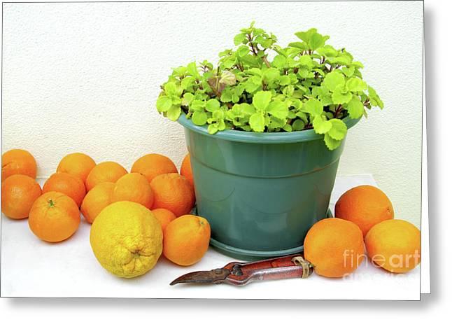 Oranges And Vase Greeting Card by Carlos Caetano
