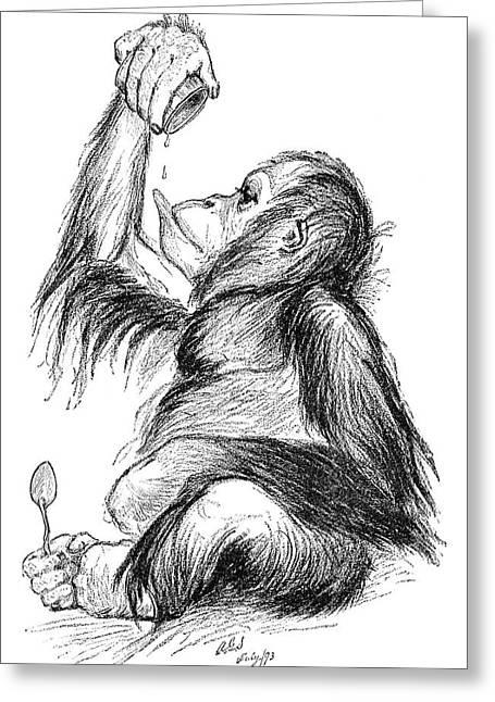 Orangutan, 19th Century Greeting Card by