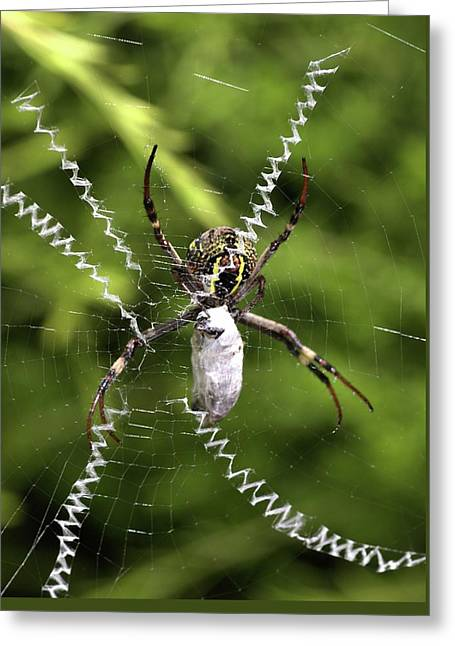 Greeting Card featuring the photograph Orb Weaver by Joy Watson