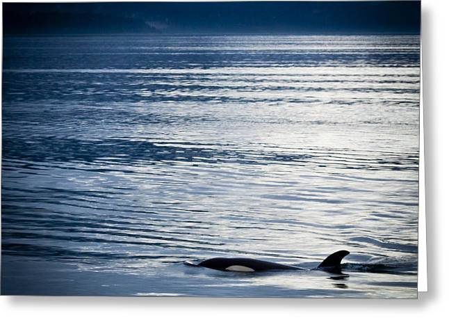 Orca Surfacing Greeting Card by Darcy Michaelchuk