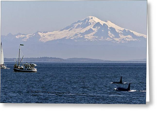 Orca's And Mt Baker Greeting Card by Tony Locke