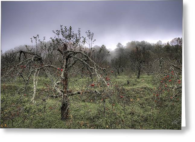 Orchard At Altapass Greeting Card by Williams-Cairns Photography LLC
