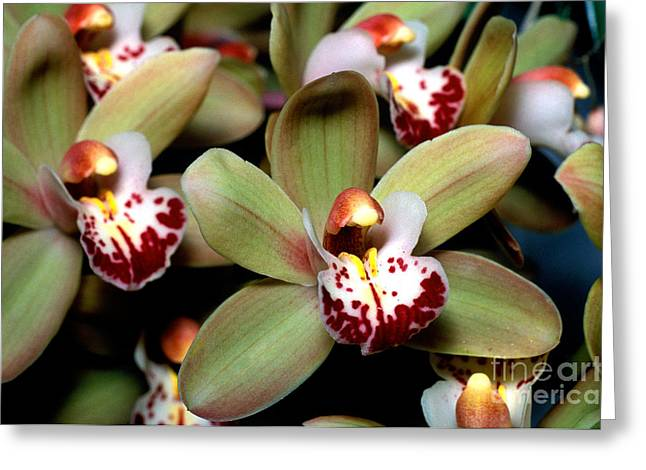 Orchid 15 Greeting Card by Terry Elniski