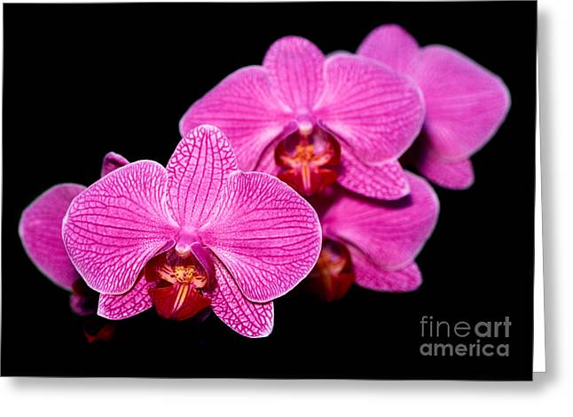 Orchid 17 Greeting Card by Terry Elniski