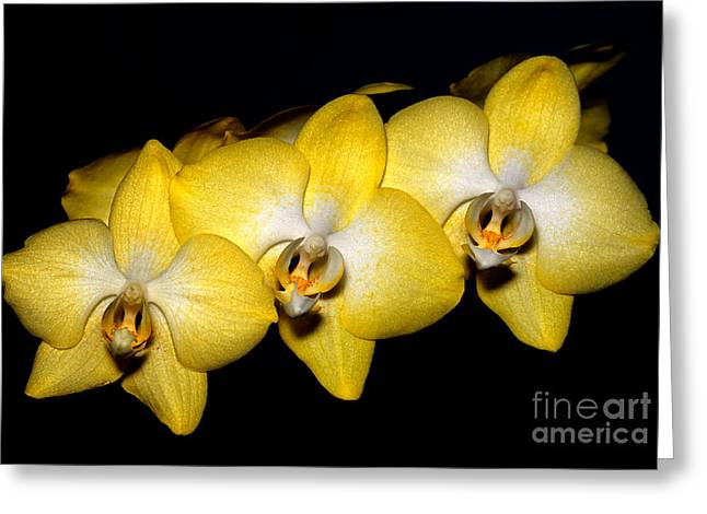 Orchid 19 Greeting Card by Terry Elniski