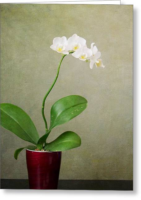 Orchid 2 Greeting Card by Mary Hershberger