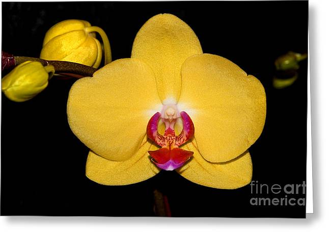 Orchid 24 Greeting Card