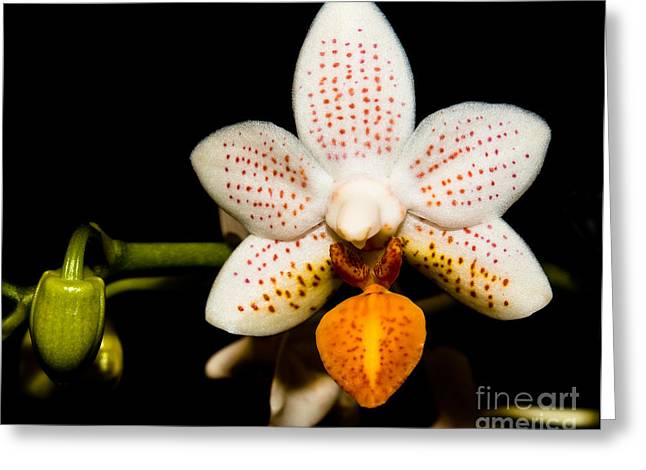 Orchid 28 Greeting Card by Terry Elniski
