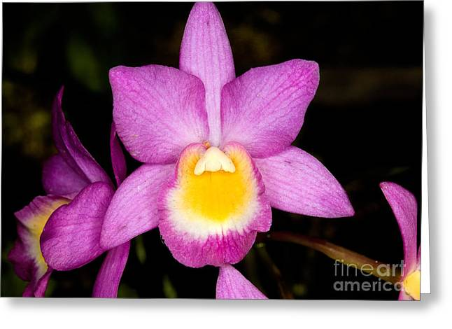 Orchid 40 Greeting Card by Terry Elniski