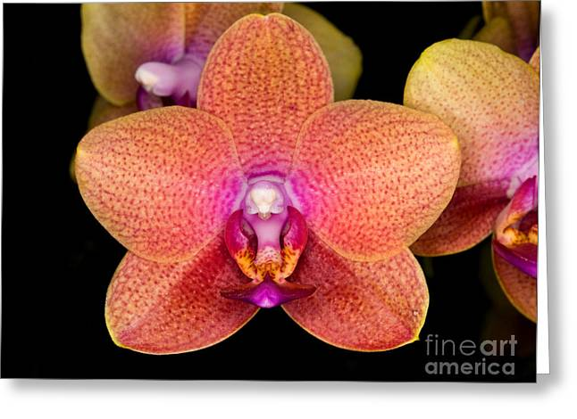 Orchid 43 Greeting Card by Terry Elniski