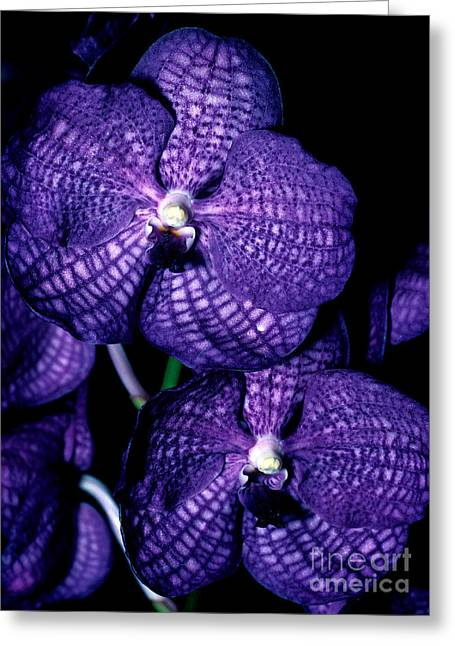 Orchid 5 Greeting Card by Terry Elniski