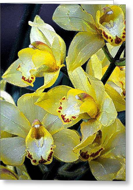 Orchid 6 Greeting Card by Pamela Cooper