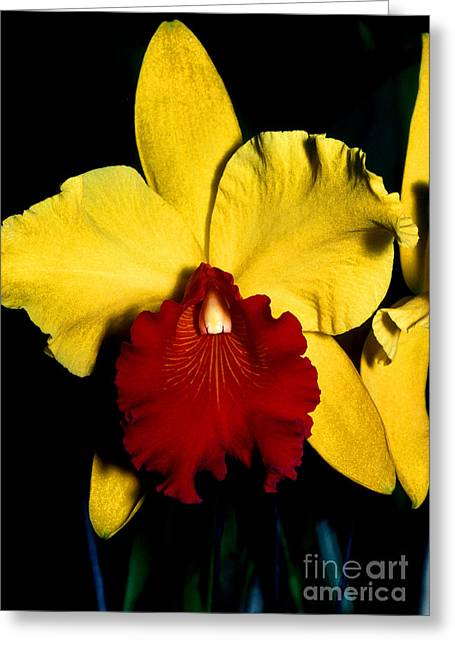 Orchid 9 Greeting Card by Terry Elniski