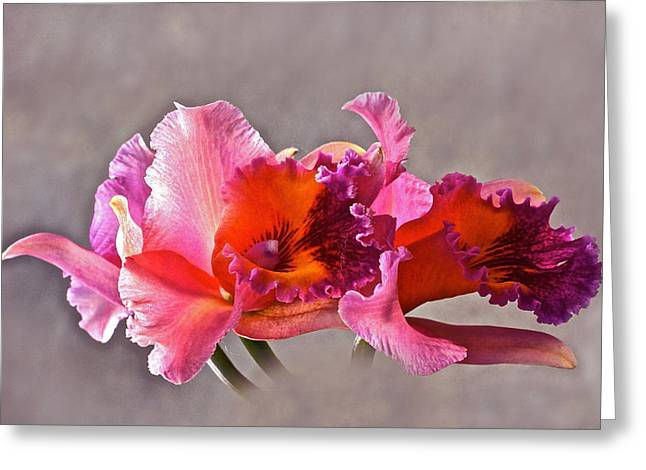Orchid And Fog Greeting Card by Byron Varvarigos