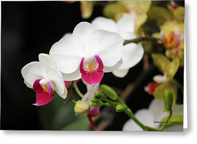 Orchid Buds Greeting Card