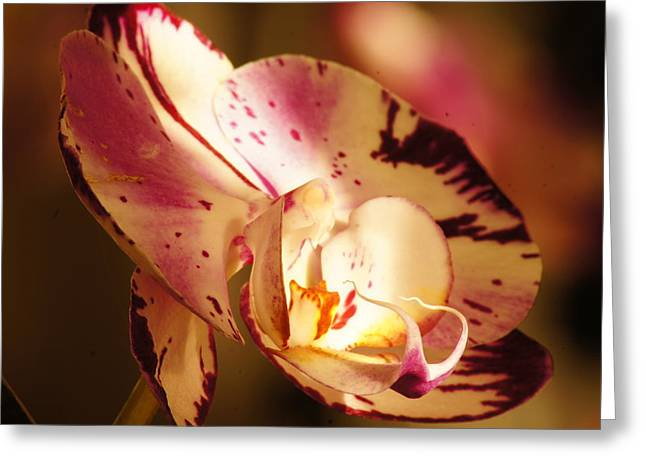 Orchid Fangs Greeting Card by Bj Hodges