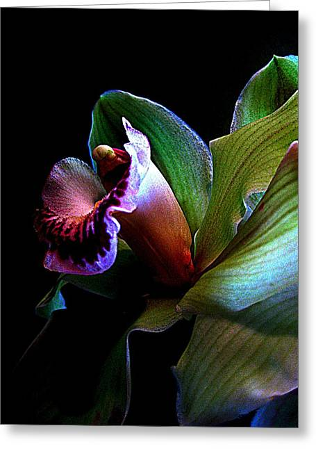 Orchid Gem Greeting Card