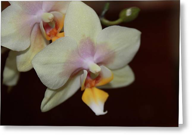 Greeting Card featuring the photograph Orchid I by Kelly Hazel