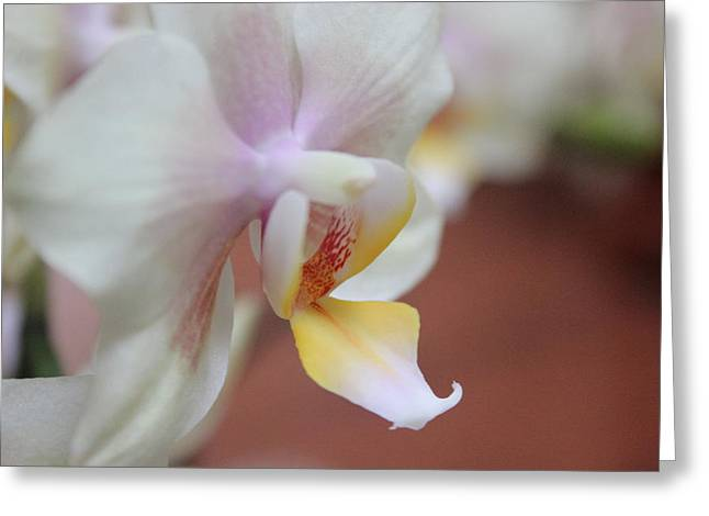 Greeting Card featuring the photograph Orchid II by Kelly Hazel