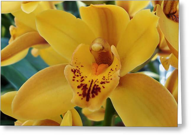 Orchid Greeting Card by Kathleen Holley