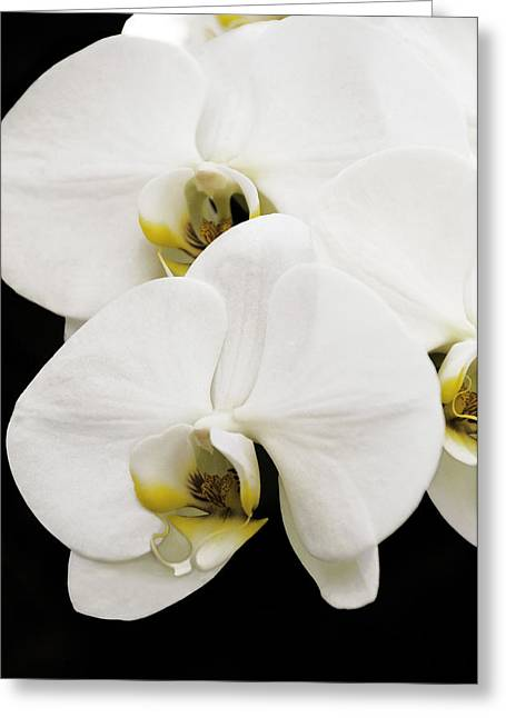 Orchid Greeting Card by Paul Plaine