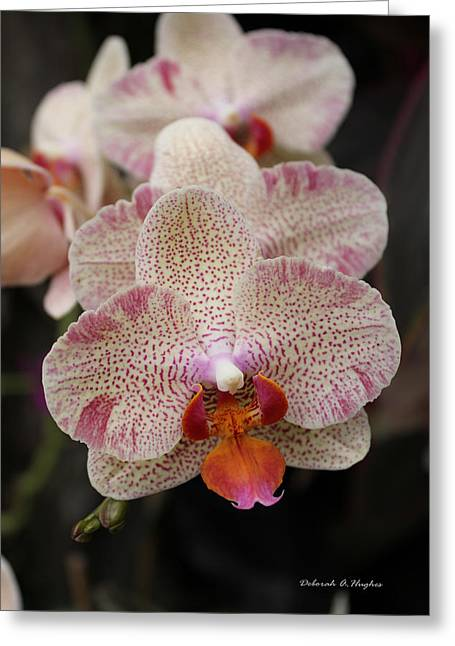 Orchid Perspective Greeting Card
