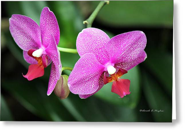 Orchid Purple Greeting Card