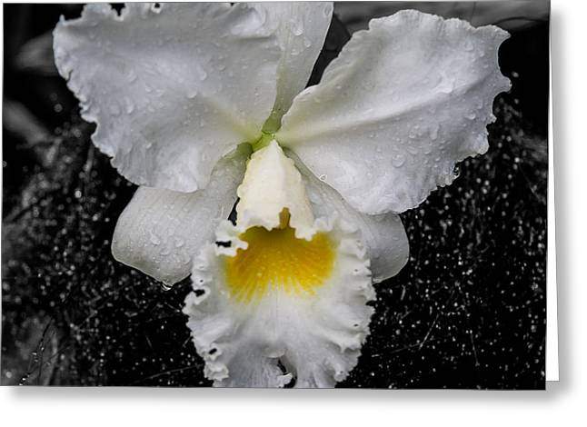 Orchid Shower Greeting Card