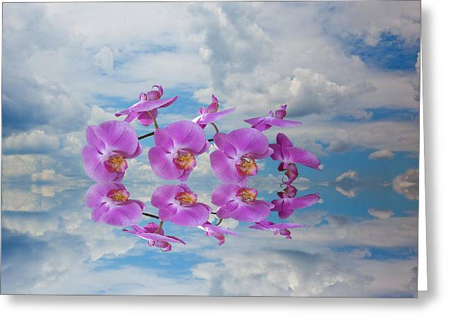 Greeting Card featuring the photograph Orchid Sky by Sarah McKoy