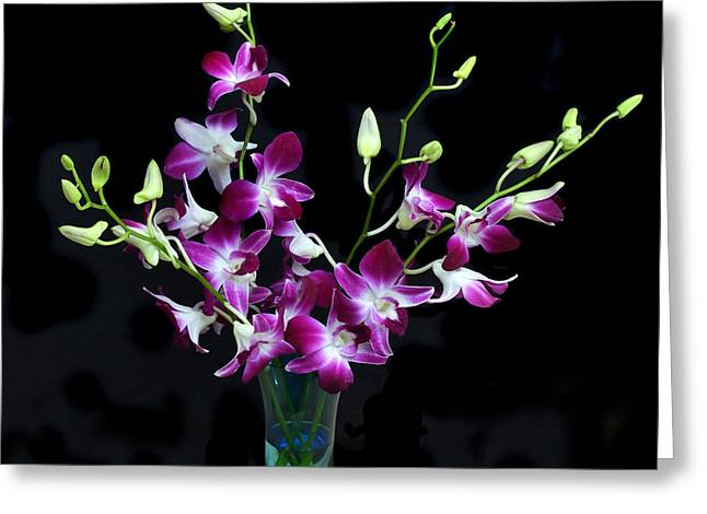 Orchid Spray. Greeting Card