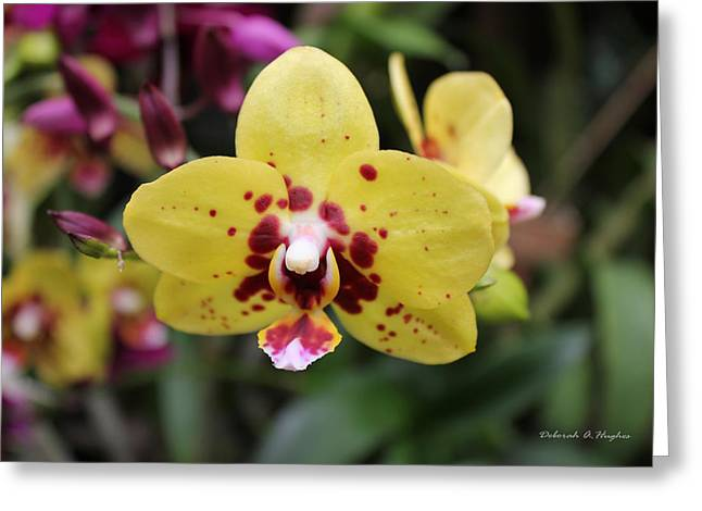 Orchid Tie Dye Greeting Card