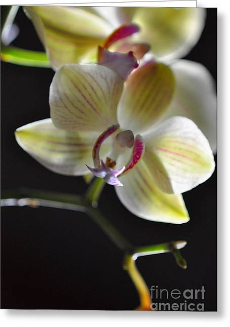 Orchidee Greeting Card by Sylvie Leandre