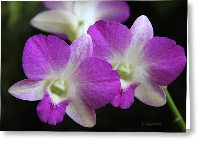 Orchids - Best Friends Greeting Card by Kerri Ligatich