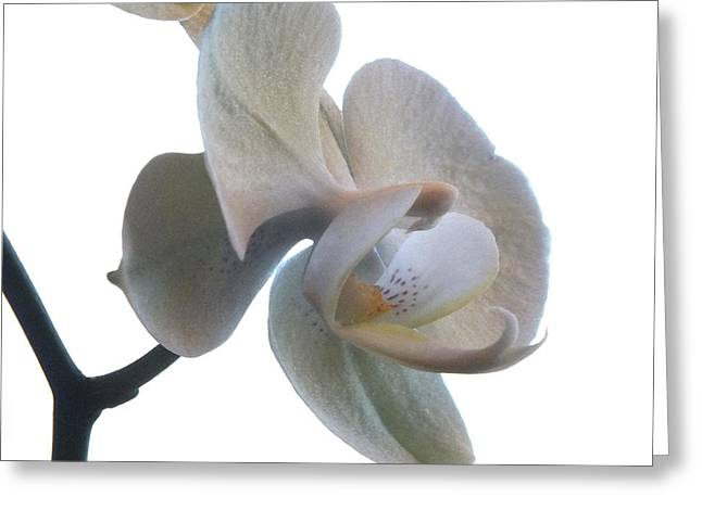 Orchids 1 Greeting Card by Mike McGlothlen