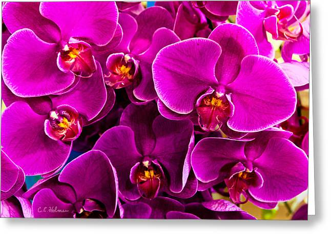 Orchids A Plenty Greeting Card by Christopher Holmes