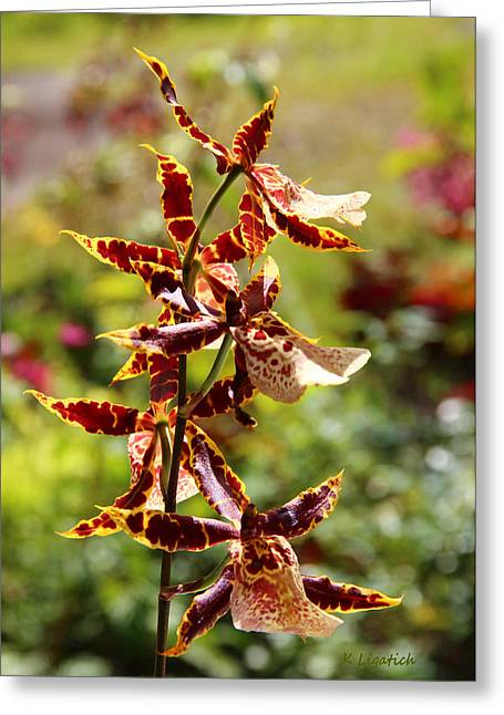 Greeting Card featuring the photograph Orchids Catching Morning Sunshine by Kerri Ligatich