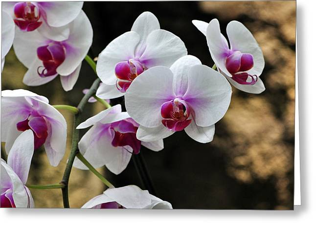 Orchids For Your Day Greeting Card by Timothy Johnson