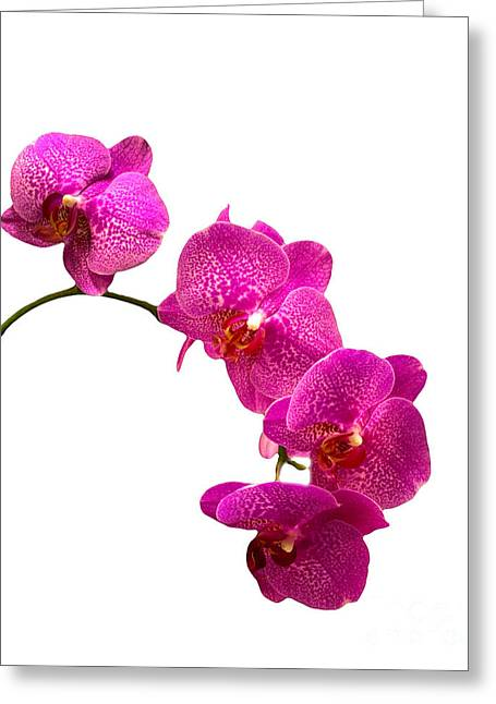 Greeting Card featuring the photograph Orchids On White by Michael Waters