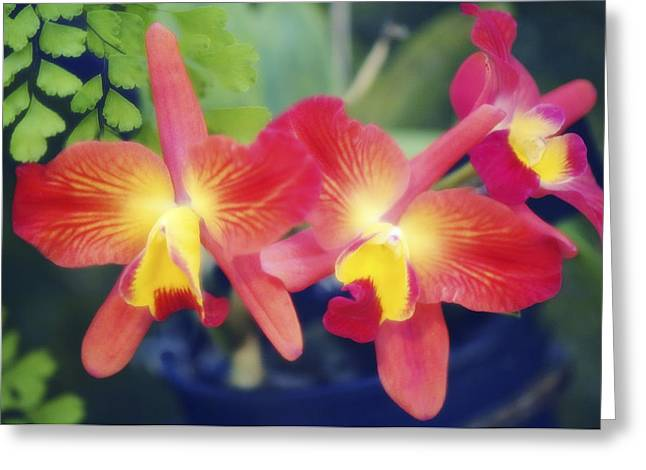 Orchids (slc. Angel's Fantasy) Greeting Card by Maria Mosolova
