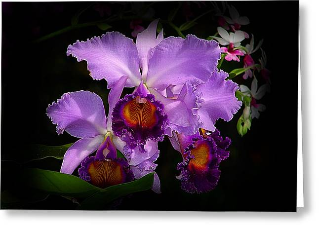 Orchidstral Beauty Greeting Card by Blair Wainman