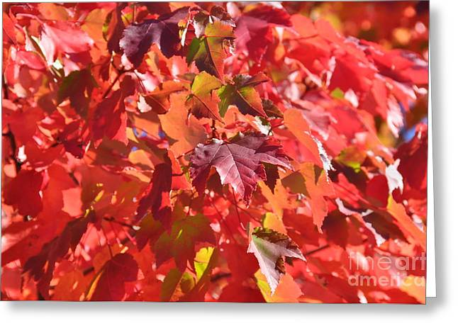 Greeting Card featuring the photograph Oregon Red by Mindy Bench