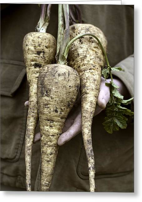 Organic Parsnips Greeting Card by Maxine Adcock