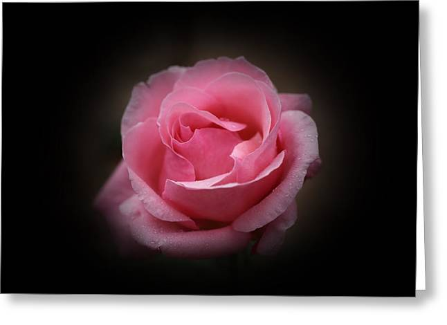 Greeting Card featuring the photograph Original Rose Petals by Anthony Rego